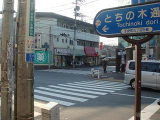 Okushiba_root2